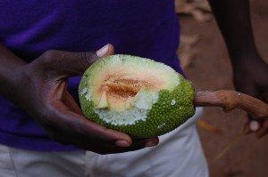 Breadfruit (copacul de pâine)