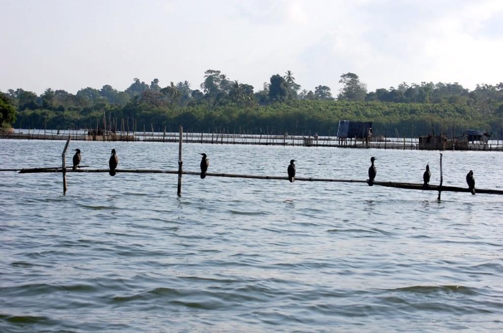 Râul Madu