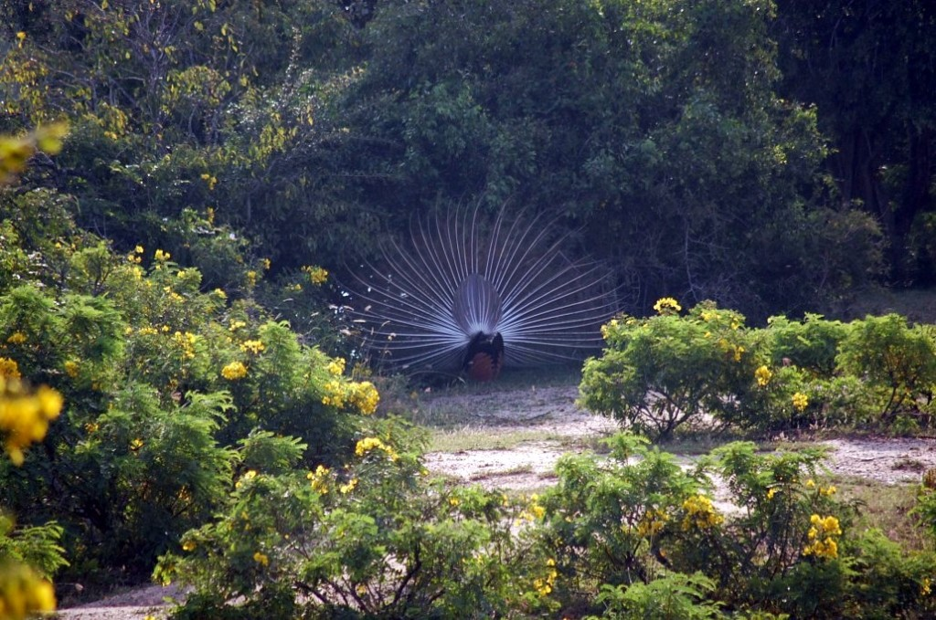 Parcul Naţional Yala