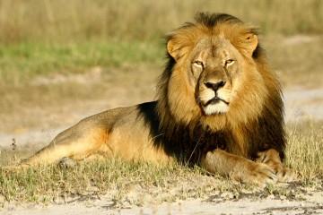 Leul Cecil (sursa: slate.com)