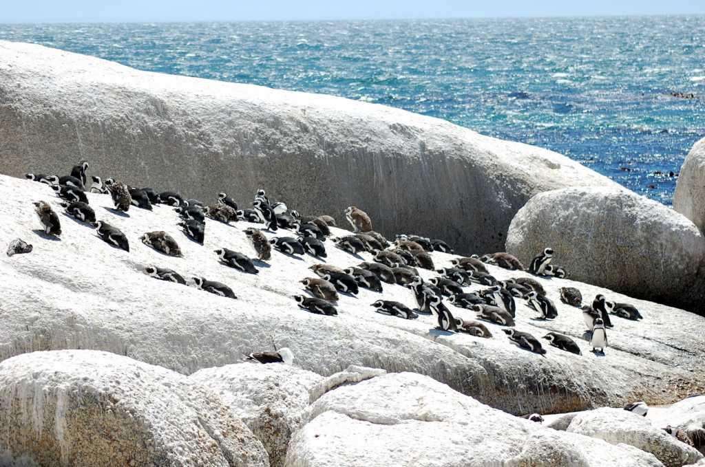 pinguini 2