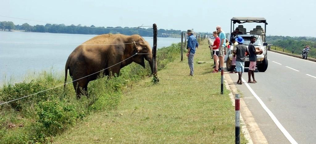Elefant scăpat din Parcul Naţional Udawalawe