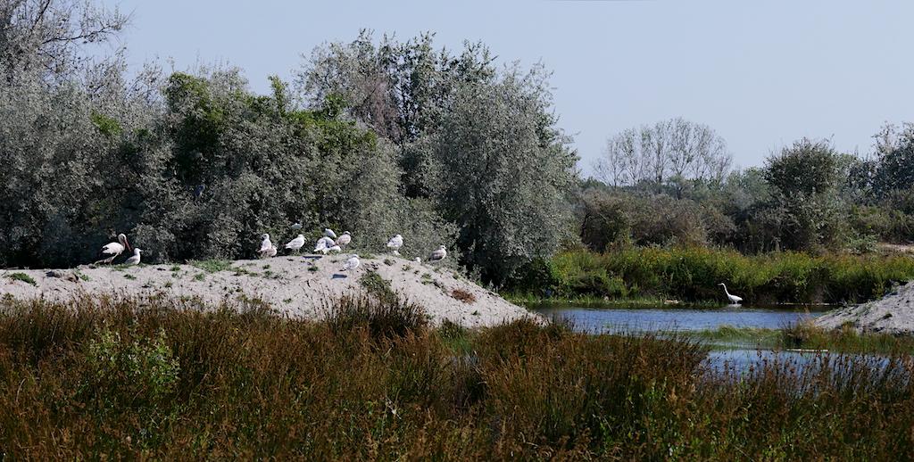 păsări pe malul unei bălți din Sfântu Gheorghe