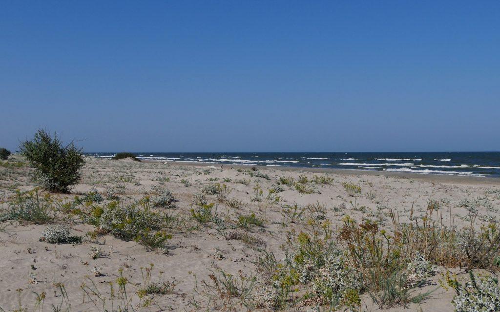 plajă cu ciulini în Sfântu Gheorghe