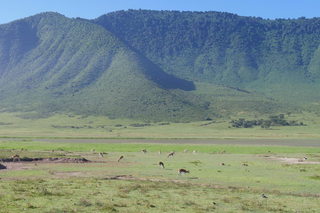 Munți înverziți în depărtare și antilope și gazele la baza muntelui