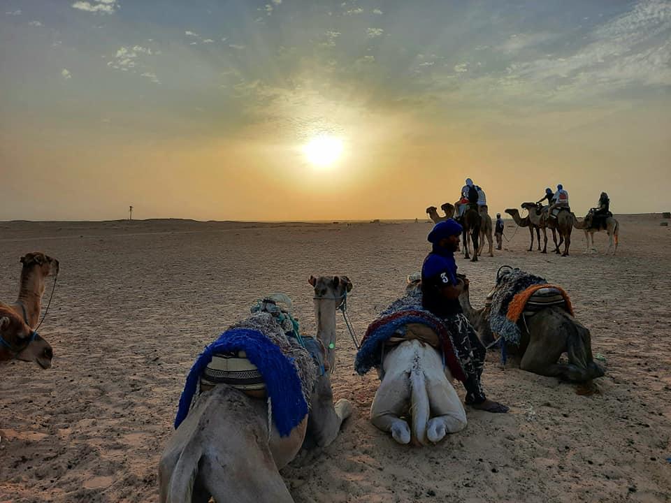 cămile, apus de soare, deșert, berberi