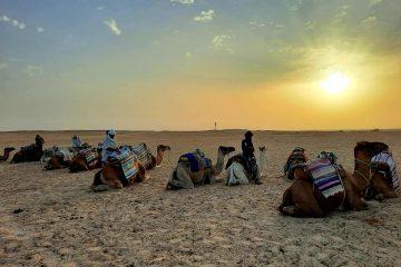 cămile care stau jos, apus de soare, berberi