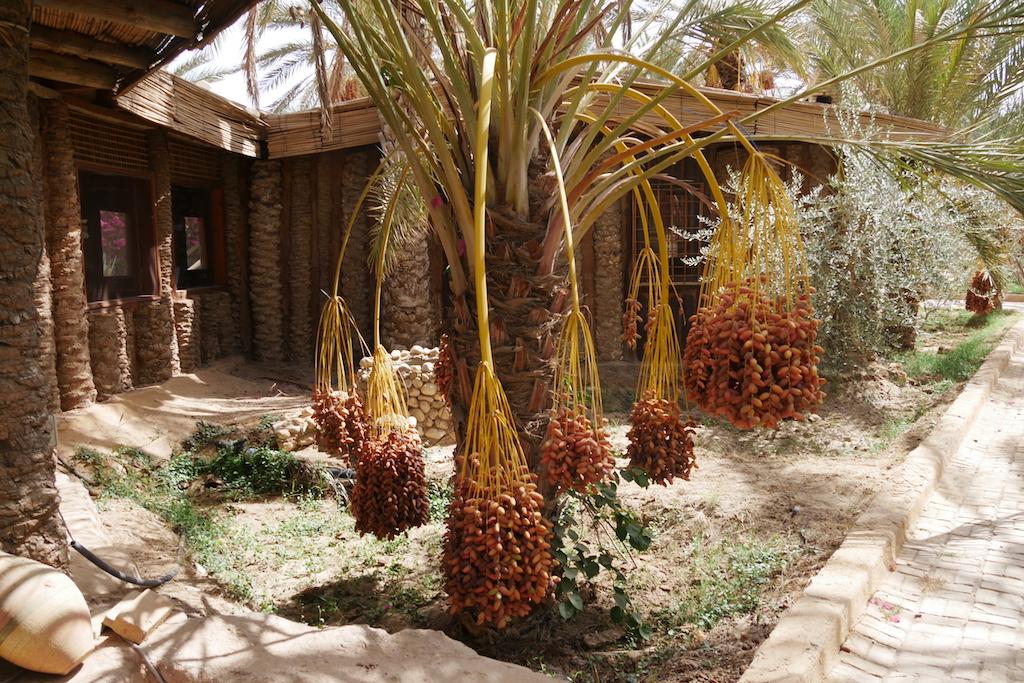 palmieri, culrmale, resprt