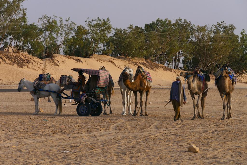 oameni, cămile, cai, Douz, Tunisia